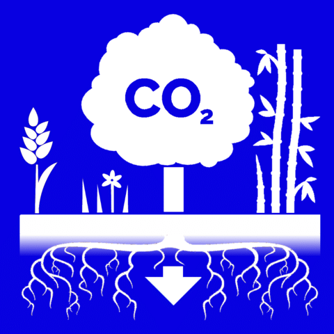 Graphic showing carbon dioxide capture and storage