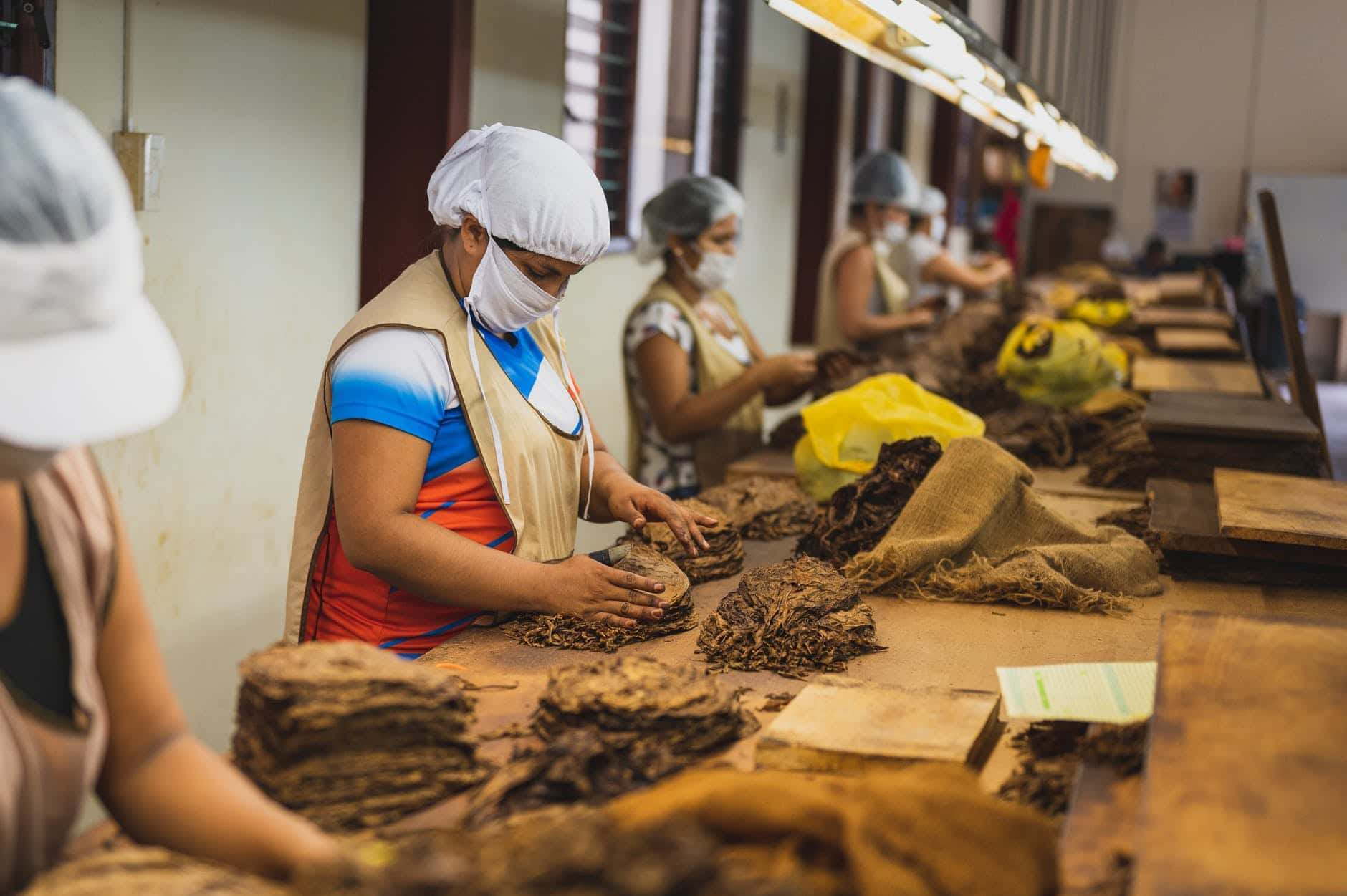unrecognizable factory employees in uniforms making cigars