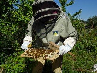 Beekeeper in action