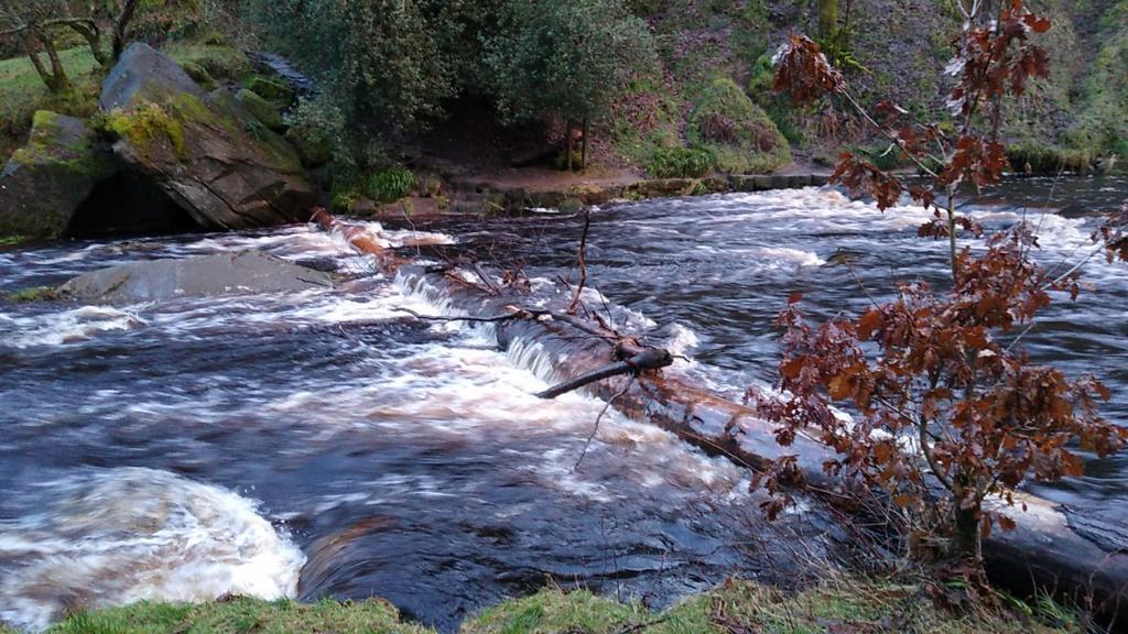 Image description: an overflowing brook.