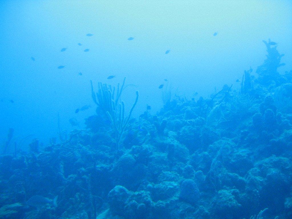 mining ocean