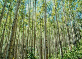 Woodland trust scheme